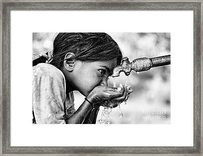 Drinking Water Framed Print by Tim Gainey