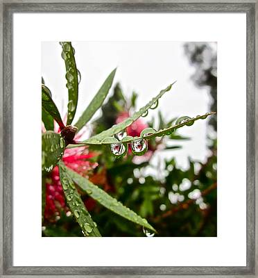Drip And Drop Framed Print by Gwyn Newcombe