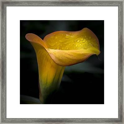 Droplets On Mango Lily Framed Print by Julie Palencia