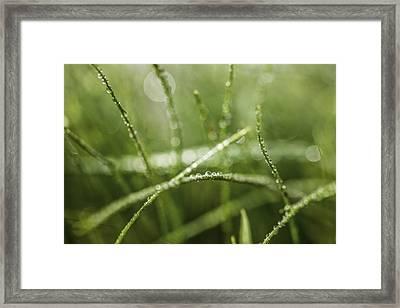 Drops Framed Print by Cindy Grundsten