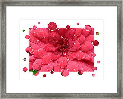 Drops Upon Raindrops 1 Framed Print by Carol Groenen