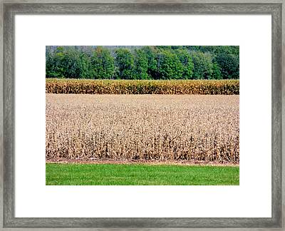 Dry Corn Field 1 Framed Print by Lanjee Chee