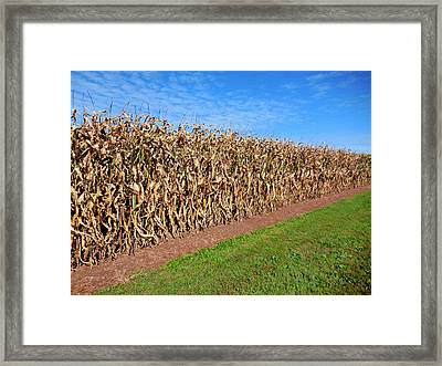 Dry Corn Field 2 Framed Print by Lanjee Chee