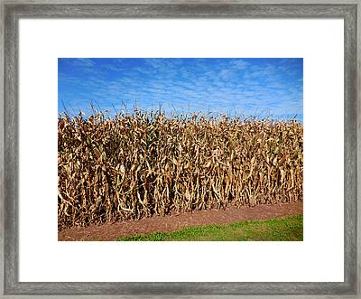 Dry Corn Field 3 Framed Print by Lanjee Chee