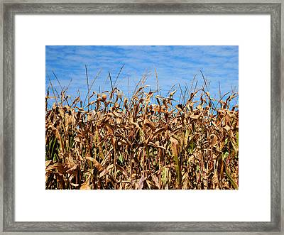 Dry Corn Field 4 Framed Print by Lanjee Chee