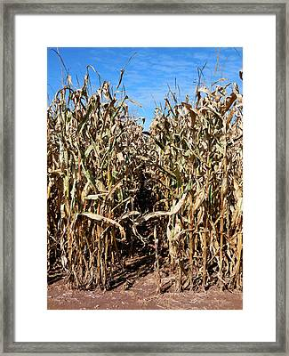 Dry Corn Field 6 Framed Print by Lanjee Chee