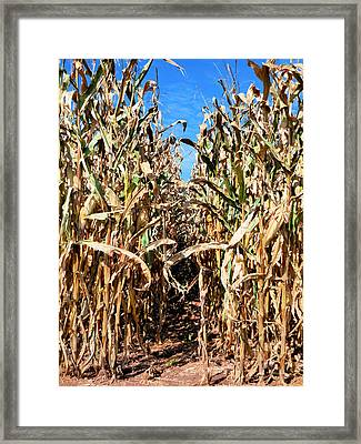 Dry Corn Field 7 Framed Print by Lanjee Chee