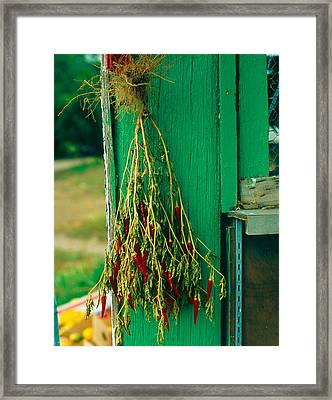 Drying Chili Peppers Rinconada Nm Framed Print by Troy Montemayor