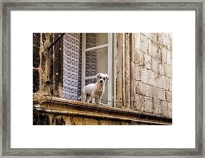 Dubrovnik Dog Framed Print by Lindley Johnson