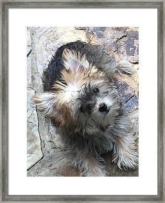 Duchess  Framed Print by Tamara Murphy