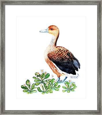 Duck And Daisies Framed Print by Sandra Moore