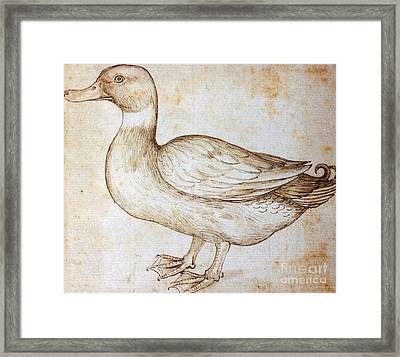Duck Framed Print by Leonardo Da Vinci