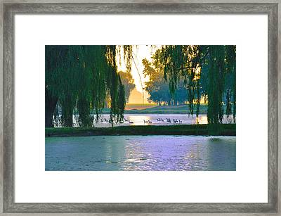Duck Pond At Dawn Framed Print by Bill Cannon