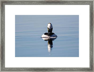 Duck Tail Framed Print by Bill Wakeley