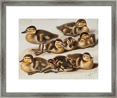 Ducklings Framed Print by Magnus von Wright