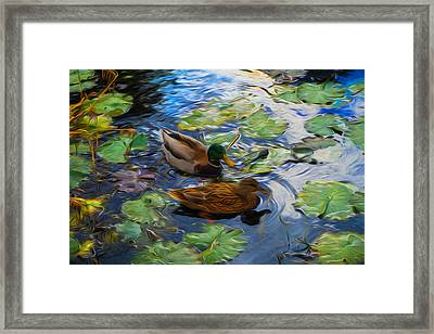 Ducks In Lily Pond Framed Print by Lilia D