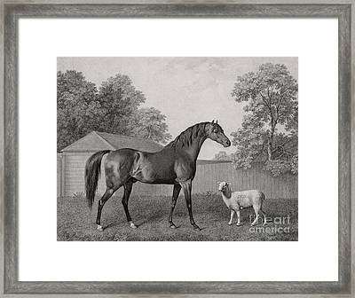 Dungannon Framed Print by George Stubbs