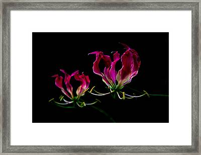Duo Lily Framed Print by David Paul Murray