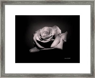 Dusty Rose Framed Print by Donna Blackhall