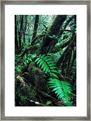 Dwarf Forest El Yunque Framed Print by Thomas R Fletcher