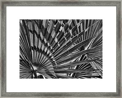 Dwarf Palmetto Fronds Framed Print by Tim Gainey