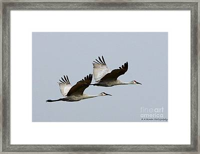 Dynamic Duo Framed Print by Barbara Bowen