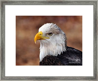Eagle 25 Framed Print by Marty Koch