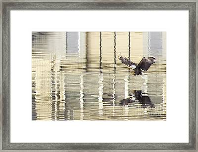 Eagle Abstract Framed Print by Idaho Scenic Images Linda Lantzy