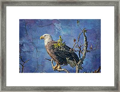 Eagle In The Eye Of The Storm Framed Print by Bonnie Barry