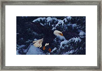 Eagle In The Storm Framed Print by Lori Mahaffey