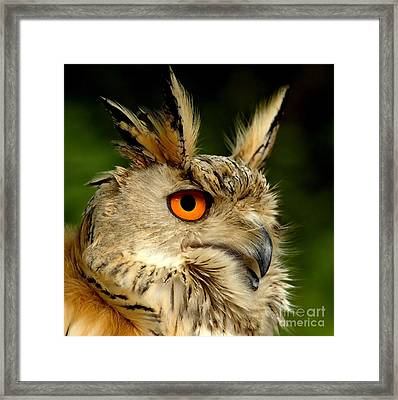 Eagle Owl Framed Print by Jacky Gerritsen