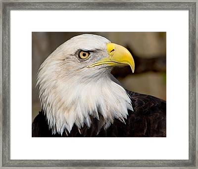 Eagle Power Framed Print by William Jobes