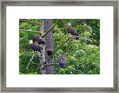 Eagle Tree Framed Print by Mike  Dawson