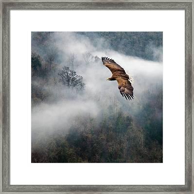Eagles Dare Framed Print by Ian David Soar