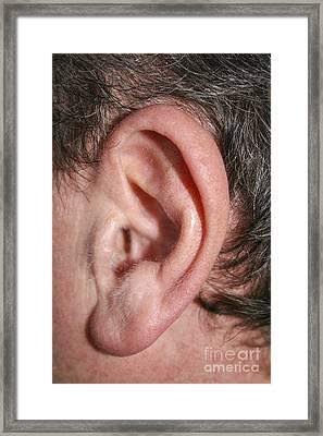 ear Framed Print by Patricia Hofmeester
