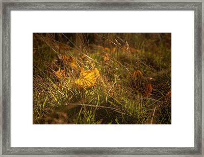 Early Autumn Leaf Fall Framed Print by Chris Fletcher
