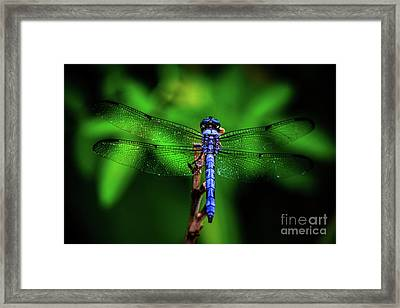 Early Morning Blue Framed Print by Patrick Dablow