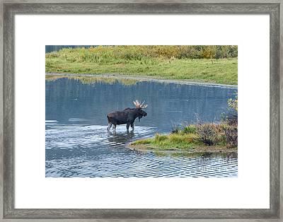 Early Morning Crossing In Grand Teton Framed Print by Sandra Bronstein