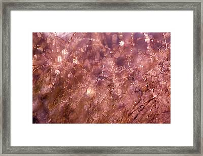 Early Morning Dew Party Framed Print by Roeselien Raimond
