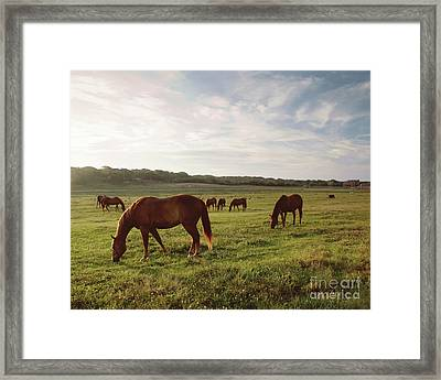 Early Morning Graze Framed Print by A New Focus Photography
