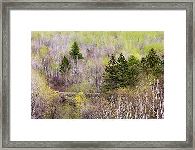 Early Spring Palette Framed Print by Mary Amerman
