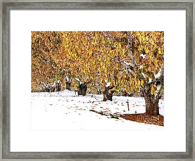 Early Winter Framed Print by   FLJohnson Photography