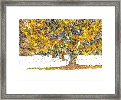 Early Winter In The Cherry Orchard Framed Print by   FLJohnson Photography