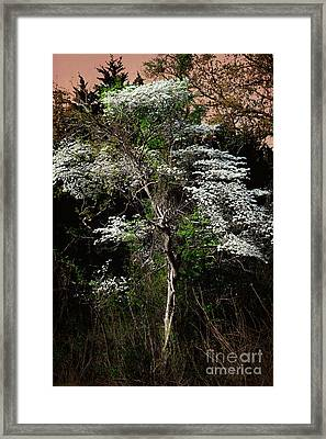 Easter Dogwood Framed Print by Tamyra Ayles