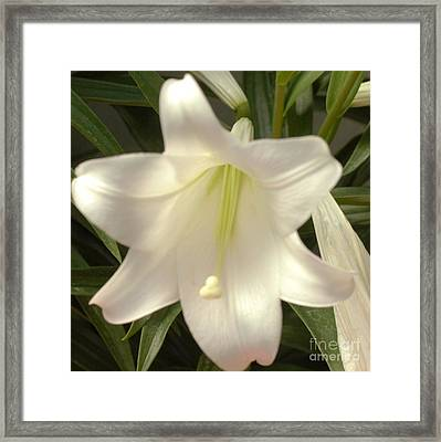 Easter Lily Framed Print by Kathleen Struckle