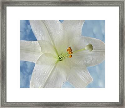 Easter Lily Skies Framed Print by Kathy Krause