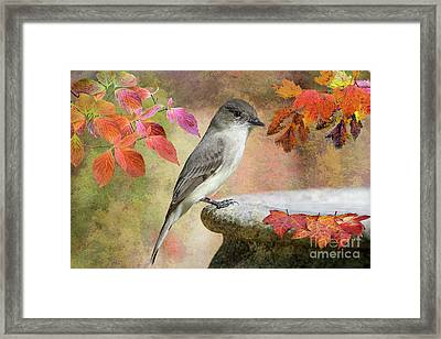 Eastern Phoebe In Autumn Framed Print by Bonnie Barry