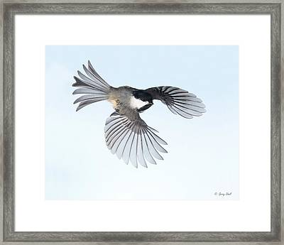 Easy Flyer Framed Print by Gerry Sibell