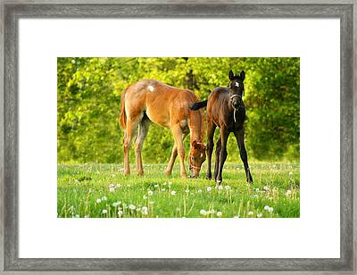 Easy Pickins Framed Print by Angela Rath