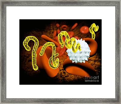 Ebola Virus Framed Print by Victor Habbick Visions and SPL and Photo Researchers
